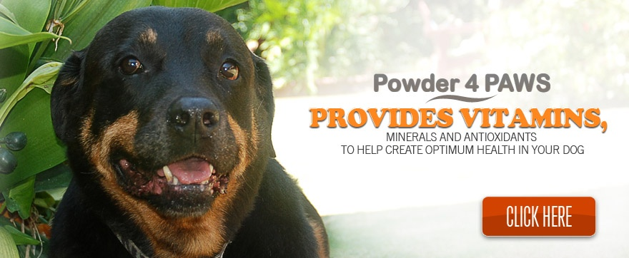 Powder 4 Paws Slideshow image